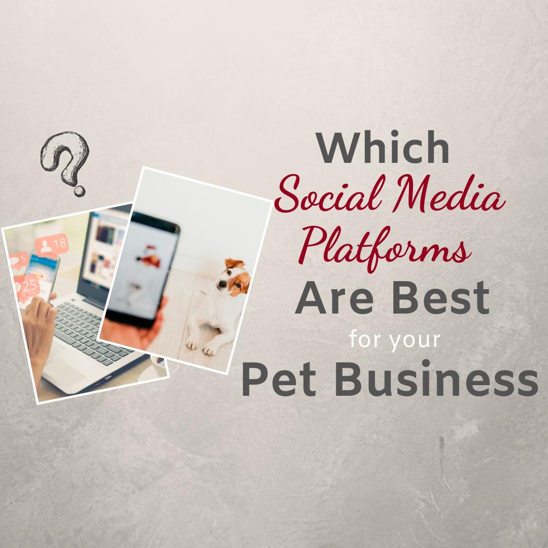 SOCIAL MEDIA PLATFORMS FOR YOUR PET BUSINESS